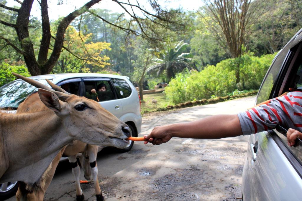 taman-safari-bogor-cisarua