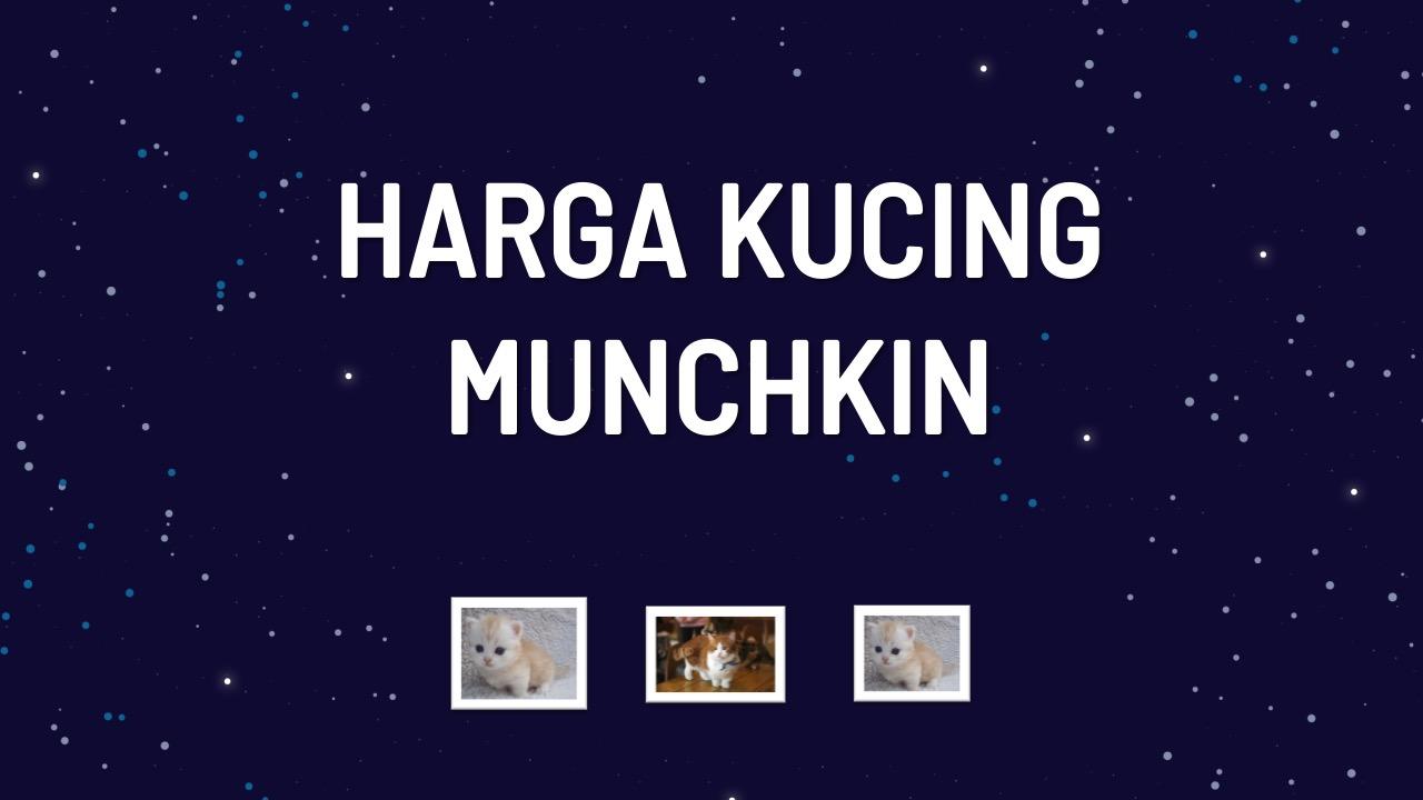 harga-kucing-munchkin