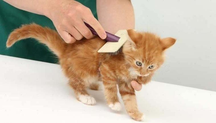 Menyisir Rambut Kucing