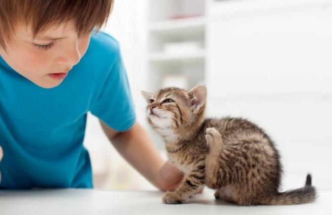 Manusia dengan Kucing