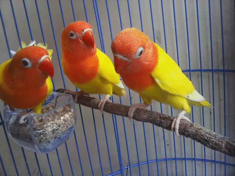 gambar burung labet pastel