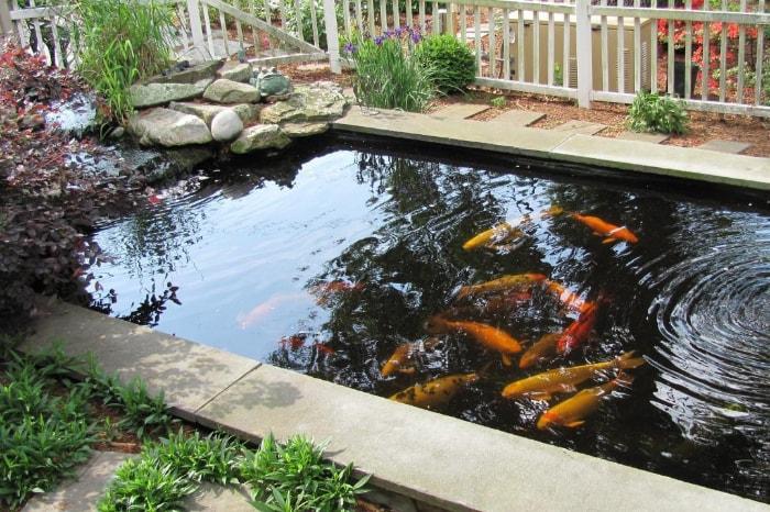 gambar kolam ikan koi