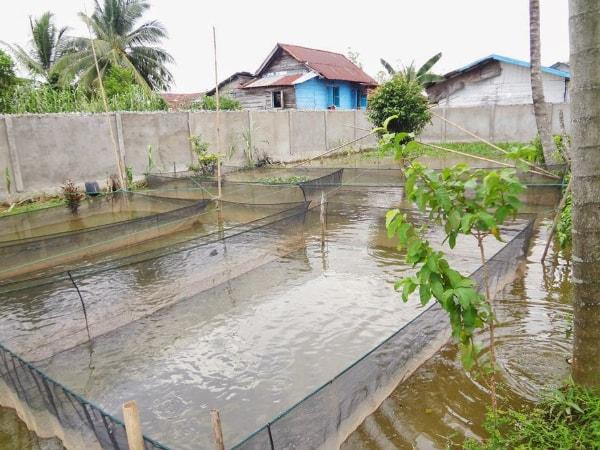 gambar kolam kualitas air