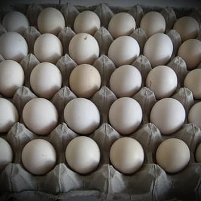 gambar telur ayam bangkok
