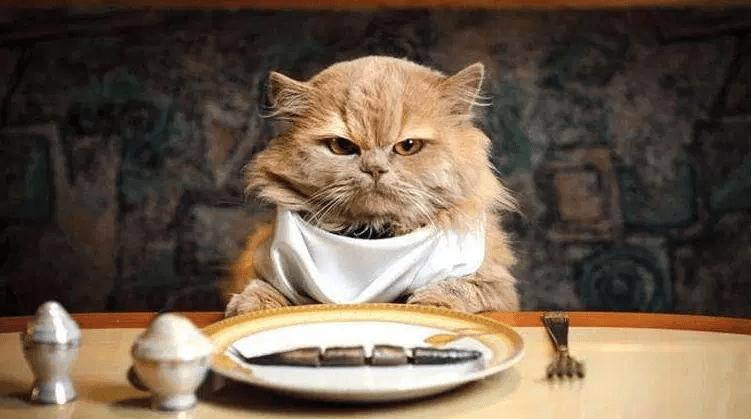 Ikan Sebagai Makanan Kucing kucinginfo.com