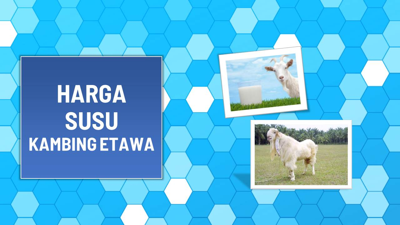 harga susu kambing etawa